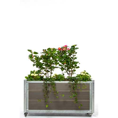 Plantekumme