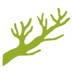 kngerække grenen